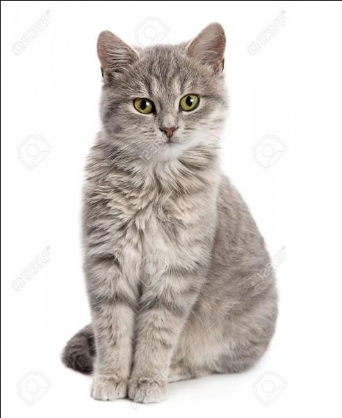 Quel est le nom de chaton de Pelage d'Orage ?