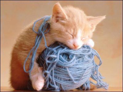 De quelle couleur est cette pelote de laine :