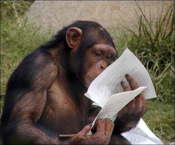 Quel animal lit des papiers ?