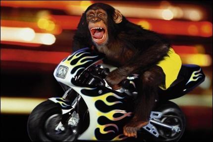 Quel animal est sur une moto ?