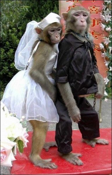 Ce couple de mariés sont des :