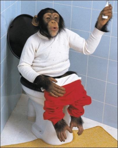 Qui est assis sur les toilettes (WC) ?