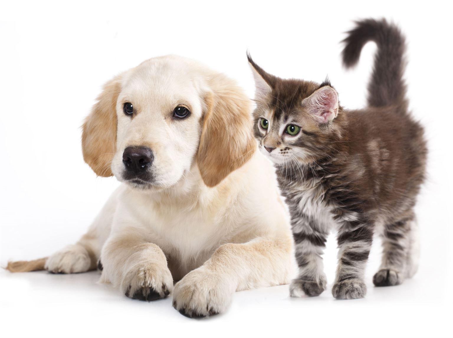 Es-tu chien ou chat ?