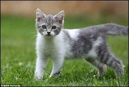 Qui est cette chatonne ?