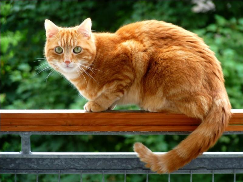 Et ce chat du Clan du Tonnerre, qui est-ce ?
