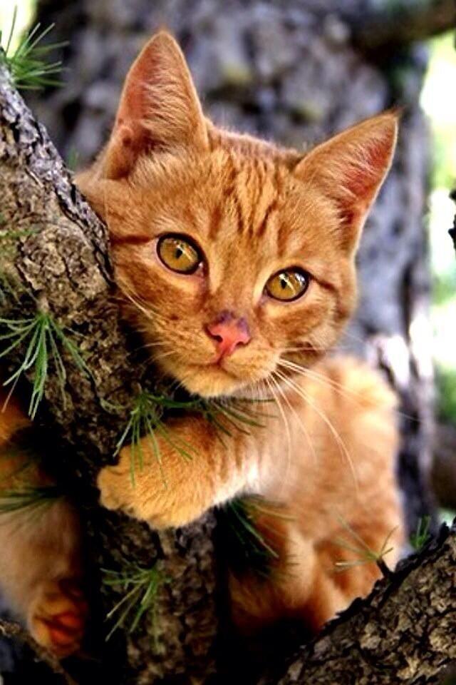 LGDC - Les chats dans la vraie vie 2