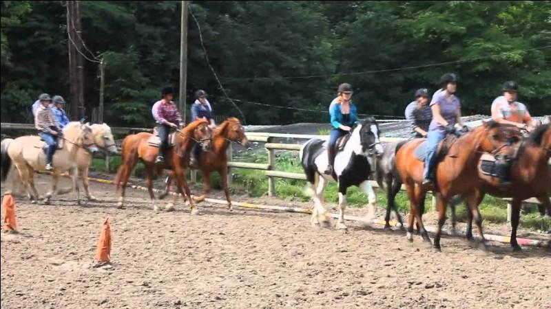 Quel cheval/poney n'aiment-elles pas ?