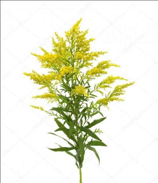 Quelle plante correspond à cette image ? (2)