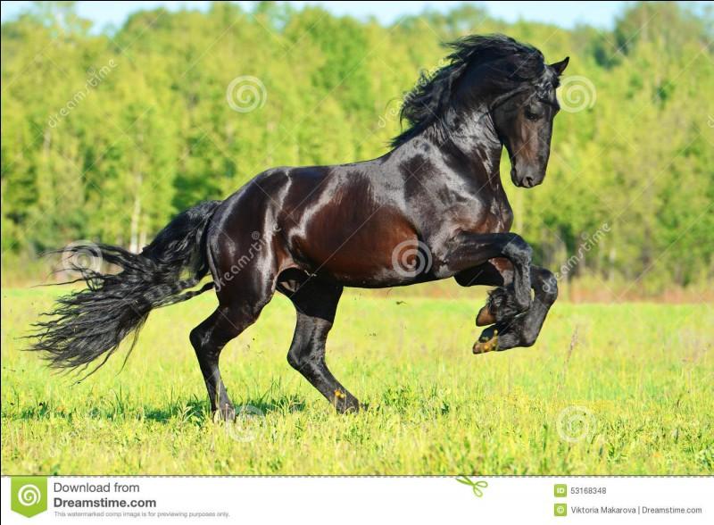 """Combien un cheval possède-t-il, environ, d'allures ?( Cela varie en fonction de certaines races, mais prenons l'exemple d'un cheval """"banal"""" )"""
