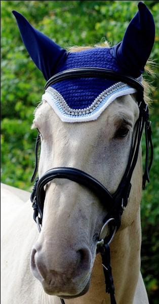 Quelle est l'utilité d'un bonnet pour cheval ?