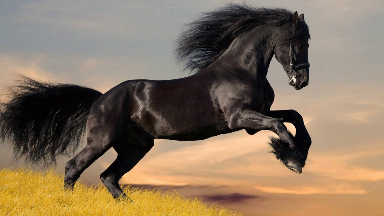Quizz, 'culture générale' sur les chevaux