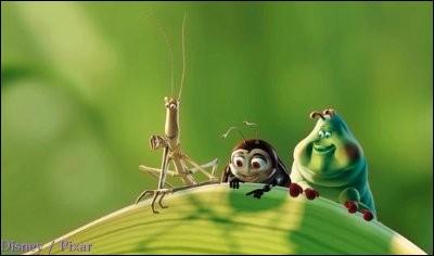 Les phasmes sont des insectes ressemblant à des bâtons !