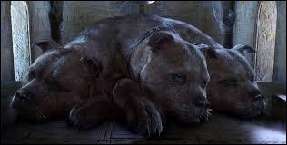 Comment se nomme le chien à trois têtes de Hagrid ?