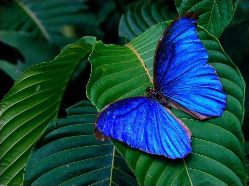 En B : qui chante 'butterfly fly away' ?