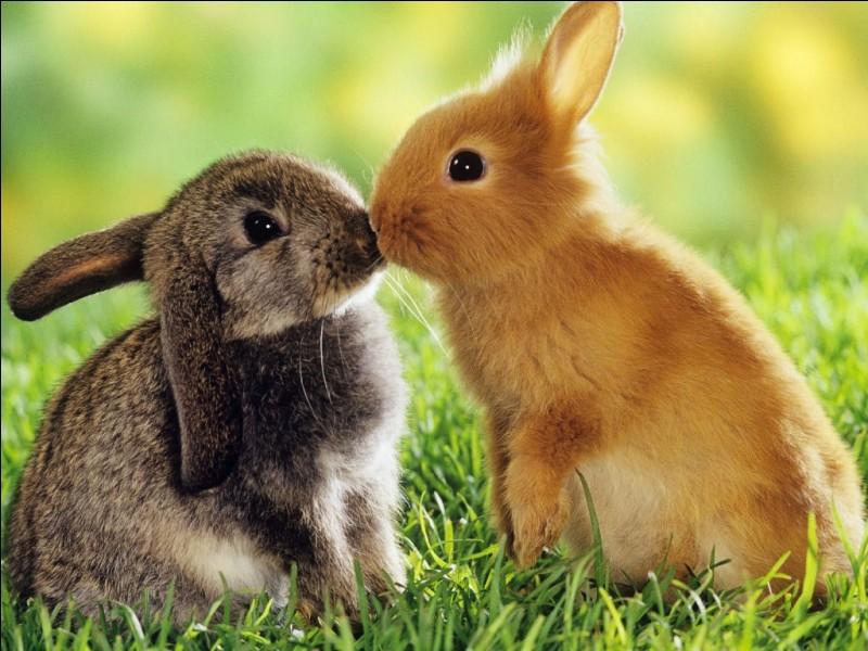 À quelle famille appartiennent les lapins ?