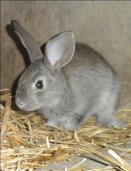 Que fait le lapin pour s'exprimer ?