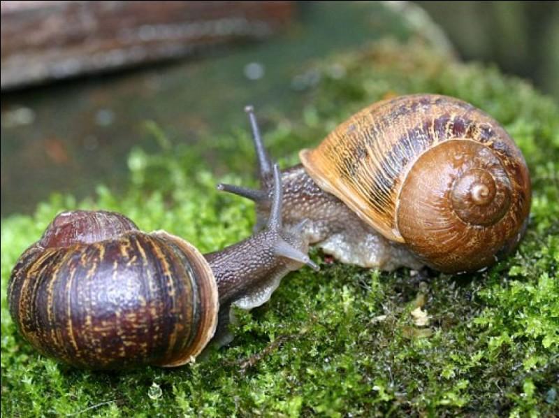 Parlons ensuite des escargots. Saviez-vous que les mâles escargots s'accouplent avec les femelles escargots ?