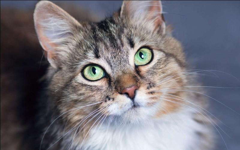 Les moustaches du chat sont aussi appelées :