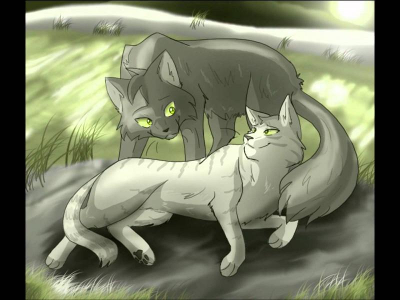 Qui sont les chatons de Plume Grise et Rivière d'Argent ?
