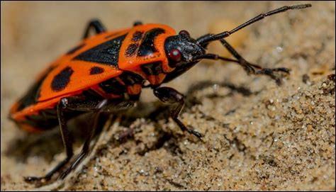 Comme s'appelle cet insecte ?