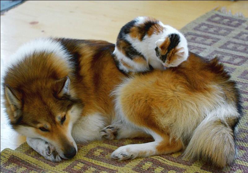 Quel animal n'est pas de la même famille que les trois autres ?