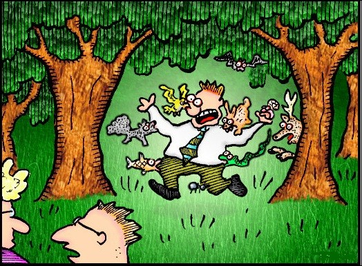 Tu te promènes dans la forêt. Que ne devrais-tu pas voir ?