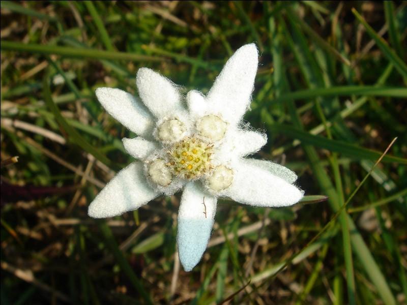 Quelle fleur est-ce ?