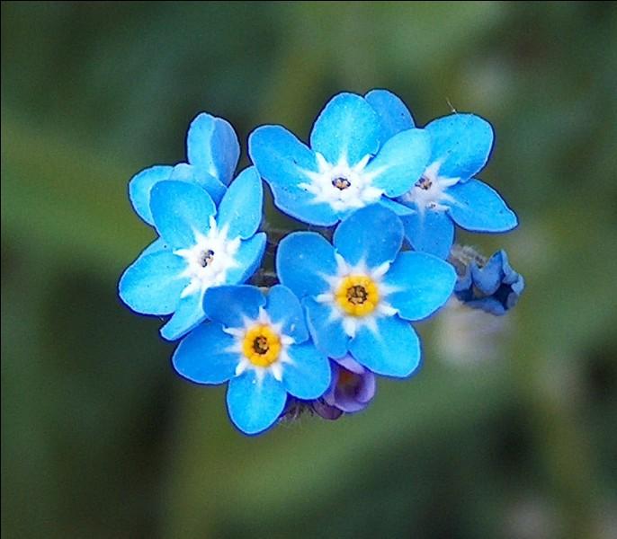 Quelles sont ces fleurs ?