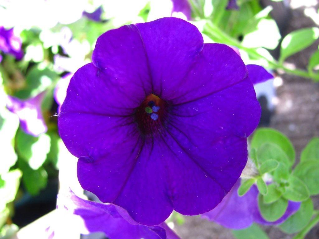 Une image = une fleur