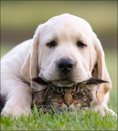 """""""S'entendre comme chien et chat"""", cela signifie :"""