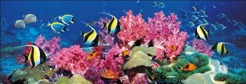 Un corail , des ...