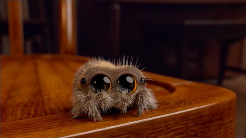 Une araignée a :