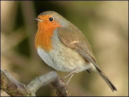 Petit oiseau mangeur d'insectes, je me démarque grâce à la couleur de mes plumes au niveau de mon cou. Je suis le ... (2 images).