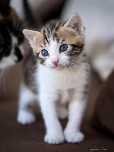 Aimes-tu quand l'on te dit que tu ressembles à un chat par tes manières ou tes mimiques ?