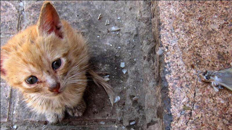 Que penses-tu quand tu vois un chat dans la rue, abandonné.
