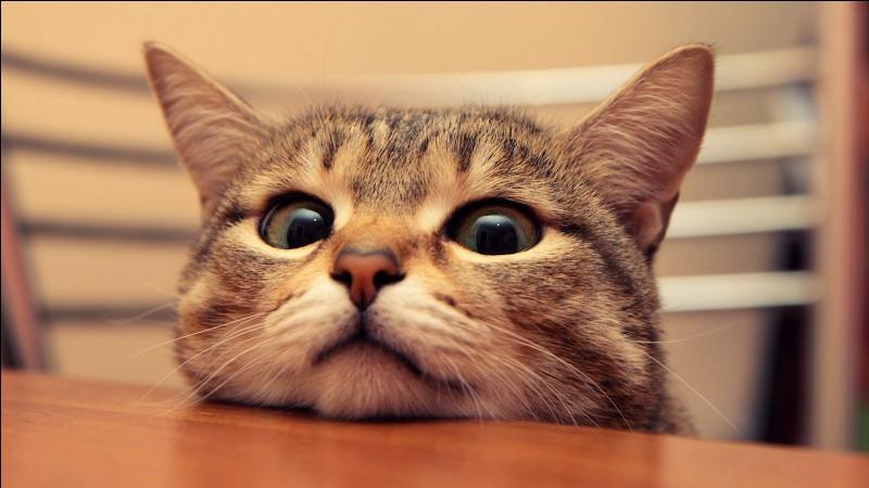 Est-ce que tu aimes bien chercher sur internet des photos de chatons trop mignons et les mettre en fond d'écran ?