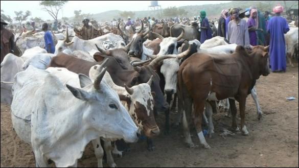 """Par quel terme traduit-on en français """"the livestock"""" ?"""