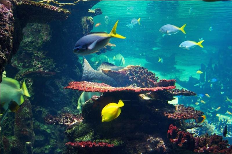 Dans quelle ville du Pas-de-Calais se trouve le parc aquatique Nausicaá ?