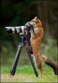 Connaissez-vous la blague du photographe ?