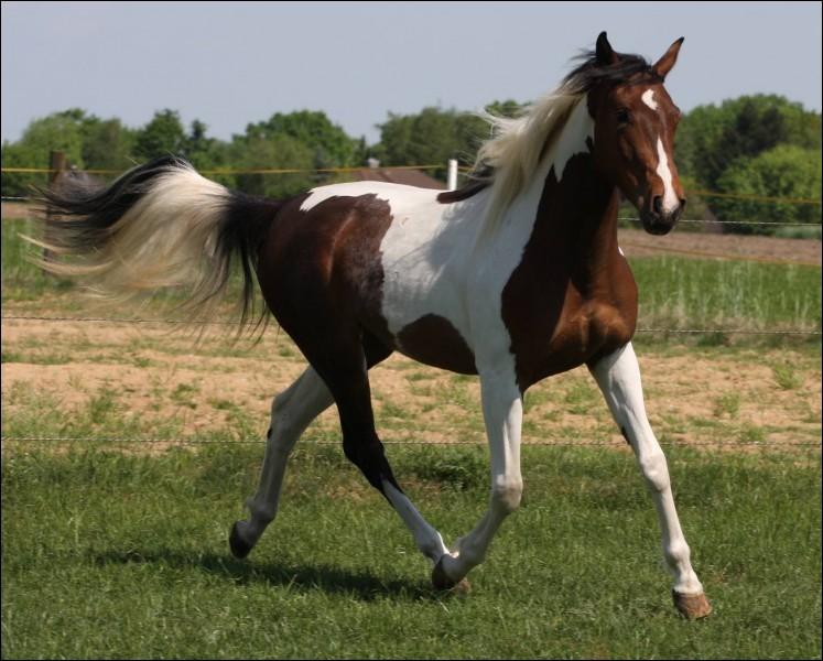 À l'état naturel, les chevaux vivent :