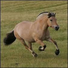 Comment s'appelle cette race de chevaux ?