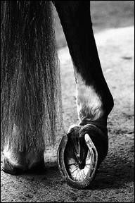 Si, comme les Pieds nickelés, vous utilisez un pied-de-biche, vous saurez peut-être aussi quoi faire du pied-de-cheval ?