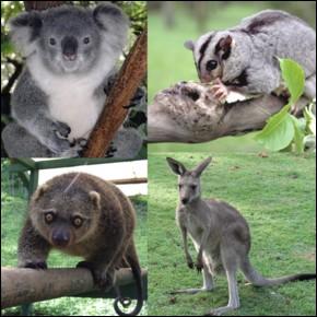 Les marsupiaux sont des mammifères.