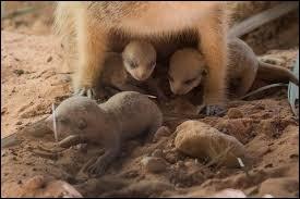 Je t'emmène avec moi visiter les grandes plaine d'Afrique, trouve le nom des bébés !