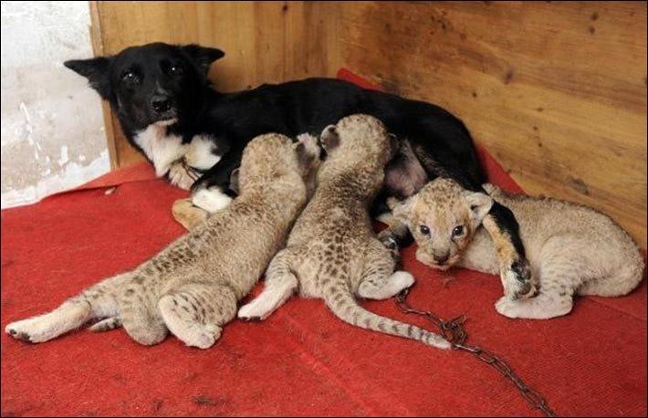 Quels bébés a adopté cette chienne ?