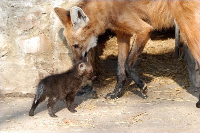 Fais bien attention à ne pas te tromper, qui est ce bébé ?