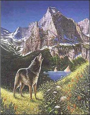 Combien y-a t'il de loups dans cette image ?