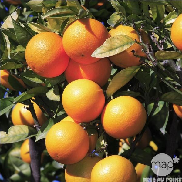 De quel pays est originaire ce fruit ?