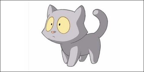 A qui appartient cet adorable chaton ?