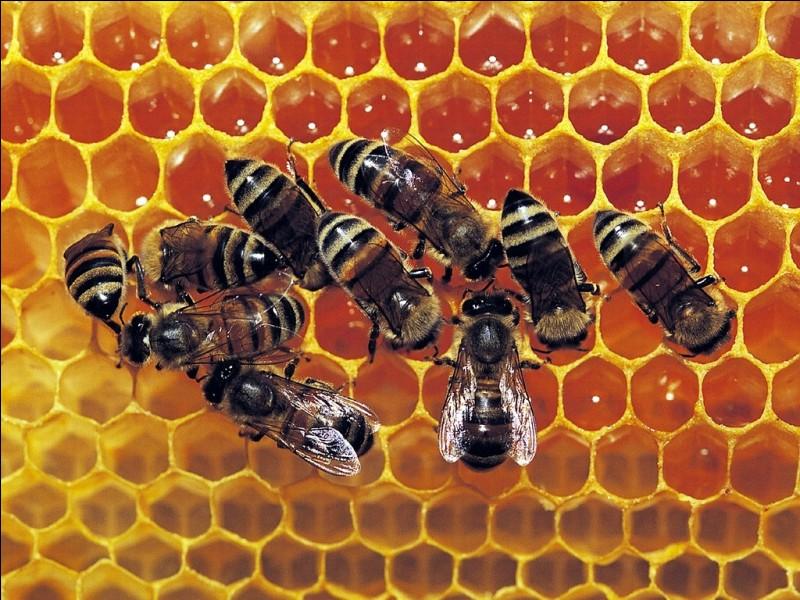 À quoi sert la fumée que les apiculteurs mettent sur les abeilles ?